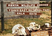 Safari in Tsavo East